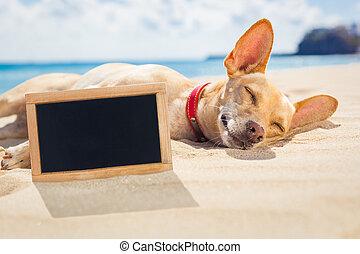 relajante, perro, en la playa