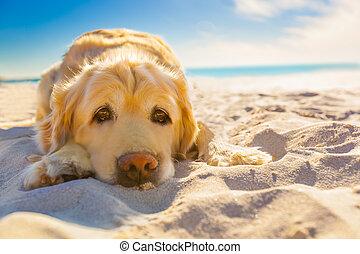 relajante, perro