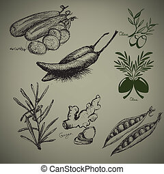 Related Vegetables. Hand drawn artwork.