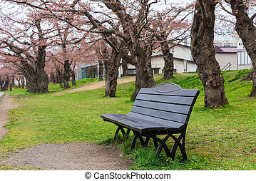 Relax seat with Cherry blossom or sakura