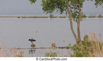 Relaxing great cormorant spread wings on Biwa lake