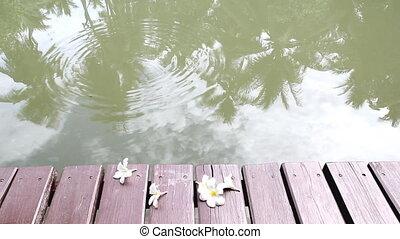 Relaxing on wooden bridge