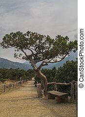 Relic juniper grove in Crimea