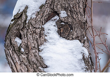 Relief texture of the bark of an apple tree in winter with snow