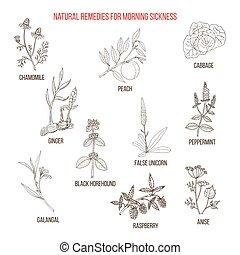 remédios, herbário, manhã, melhor, doença