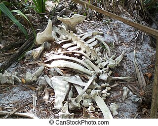 I stumbled upon these remains of a dead cow while hiking the riverbanks of the St. Johns River. The cow probably drown from the flood caused by the hurricanes here in Florida.