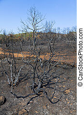 Remains of burned trees
