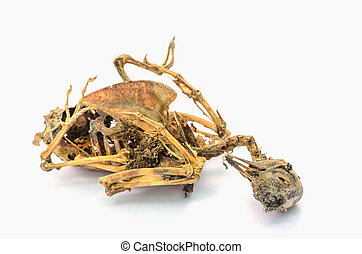 Remains of dead bird