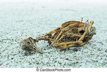Remains of dead bird