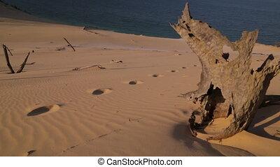 Remains Of Dead Trees, Qld Island, Australia