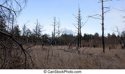 Remains of Forest Devastared by Fire