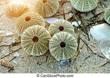 Remains of urchin on the beach