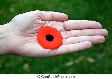 Remembrance Day Poppy - A Remembrance day poppy is seen in...