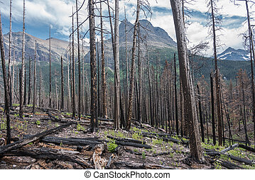 Remnants of Forest Fire After Three Years