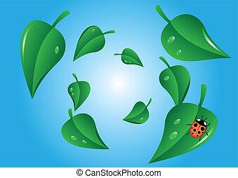 remolino, mariquita, hojas