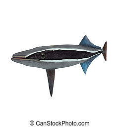 Remora pics is a collection of sciencetuts.