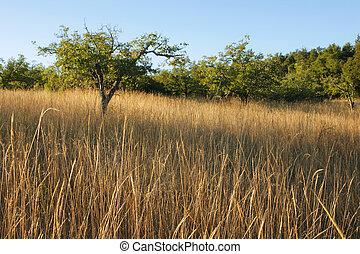 Remote chaparral field in California