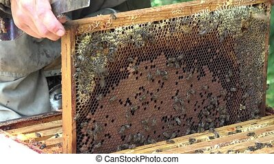 removal of frames before honey extraction