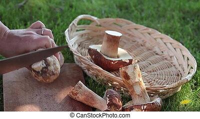 Remove Mushrooms Stalk - Remove porcini mushrooms stalk with...