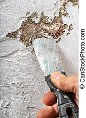Removing mildew on a freshly painted apartment wall. The wall surface was damaged by mold.
