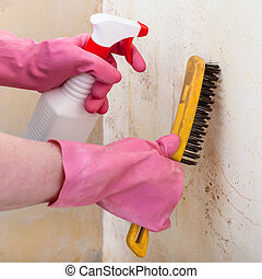 removing of mold from wall with spray and brush