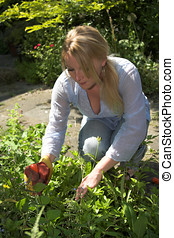 Removing the weed - Pretty blond woman working in the garden