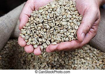Removing White Coffee Beans from the burlap bag