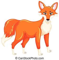 renard blanc, arrière-plan rouge