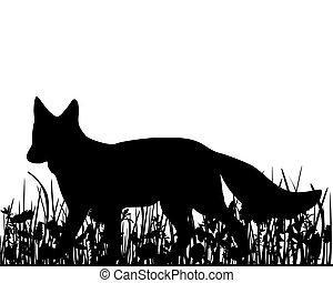 renard, pré