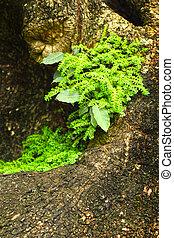 renascido, verde, soil., seedlings