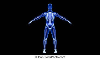 render, 3d, anatomia, tło, pętla, błękitny, ludzki, skandować, łokieć, pain., seamless, czarnoskóry, -, ciało