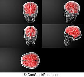 render, cerveau, humain, x rayon, 3d