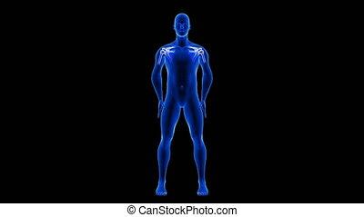 render, czarnoskóry, seamless, anatomia, błękitny, skandować, animation., ciało, ból, pętla, tło, 3d, -, ludzki, plecy