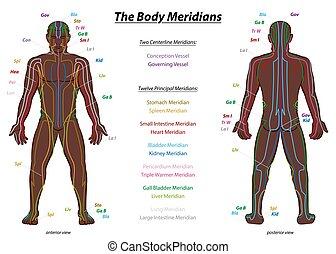 rendszer, délkör, leírás, ember, test, hím, diagram, fekete