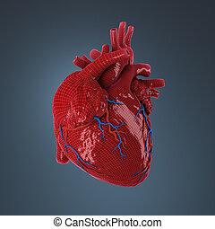 rendu, heart., humain, 3d