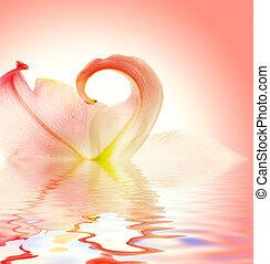 rendu, reflété, eau, élégant, fleur, lis