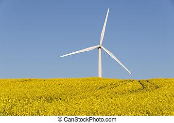 renewable energy - a wind turbine in a rapesseed field