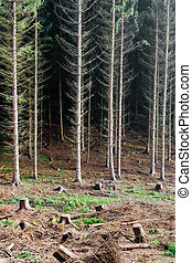 Renewable resource forest - Softwood forest partially...