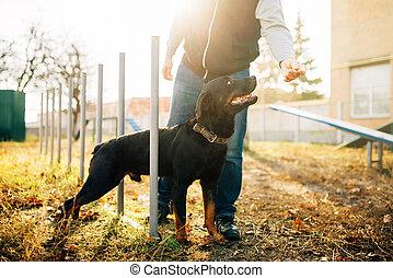 renifler, cynologist, dehors, formation, chien