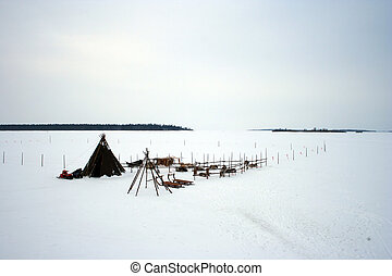 renne, camp, -, laponie