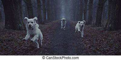 rennende , afbeelding, fantastisch, dog