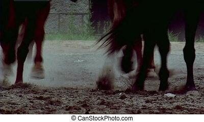 rennende , paarden