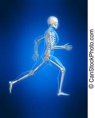 rennende , skelet