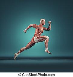 rennende , systeem, mannelijke , gespierd