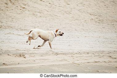 rennender , draußen, hund