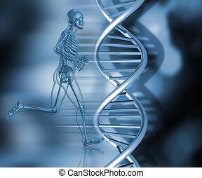 rennender , haltung, medizin, skelett