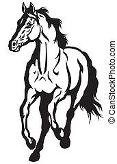 rennender , pferd, schwarz, weißes
