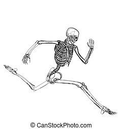 rennender , skelett, menschliche