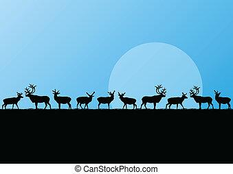 reno, manada, en, frío, norteño, paisaje, ilustración, plano...