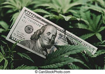 rentas, olla, cannabis., dinero, finance., industria, medical., marijuana